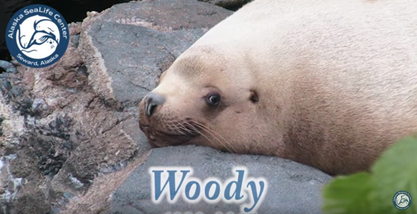 Woody: A Celebration of Life and Legacy