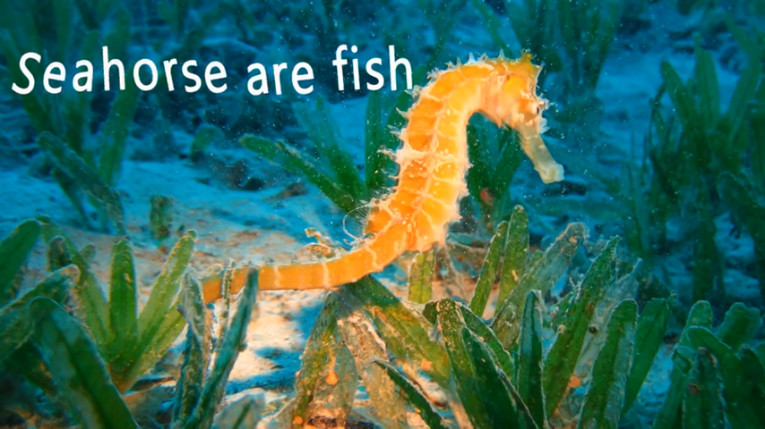 Facts About Seahorse